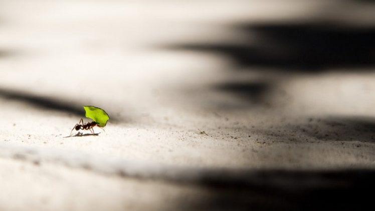 Ako na mravce v byte aj dome?